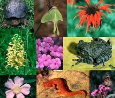 Biodiversità: è da tutelare!