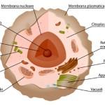 Scopri la struttura della cellula