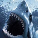 La morfologia dello squalo bianco