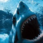 denti dello squalo bianco