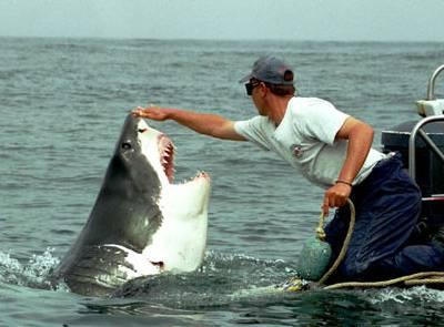 Lo squalo bianco nel Mediterraneo