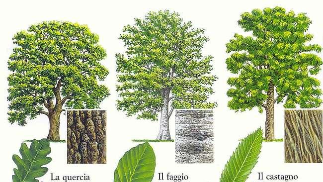 Guida su come riconoscere le piante.