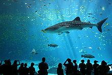 Nessuno tocchi gli squali
