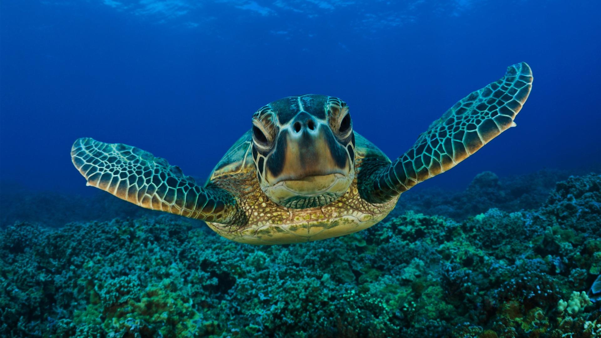 Tartaruga e testuggine sono diverse.