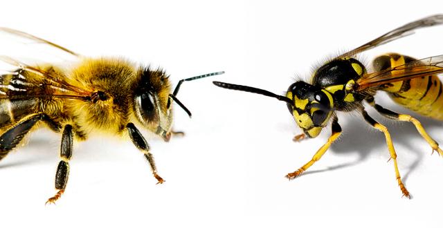 ape e vespa