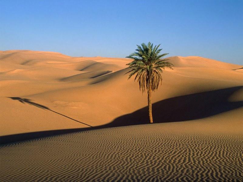Quali differenze esistono tra desertizzazione e desertificazione?