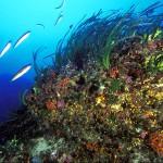 Le fanerogame marine: piante