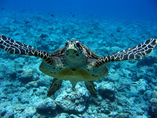 Distinguere una tartaruga maschio da una femmina.