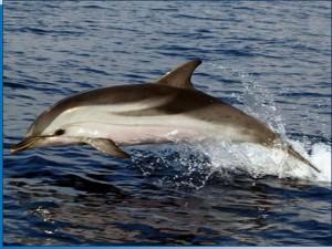Quali differenze esistono tra delfino, stenella e tursiope?
