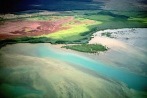 Le fioriture algali: meraviglie dei mari