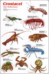 Granchi, gamberi, aragoste e altri: il mondo dei Crostacei