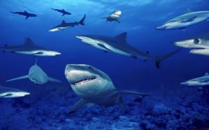 Gli squali vedono bene o sono ciechi?