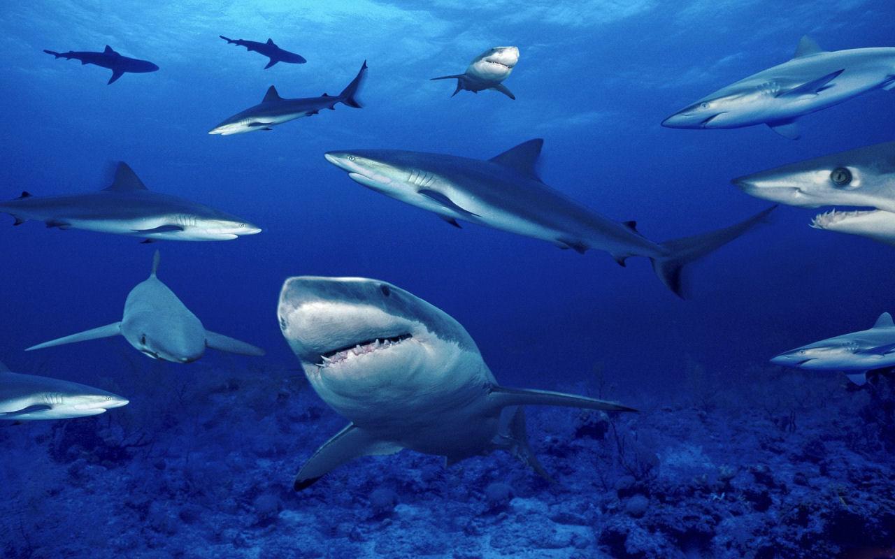 Ecco la distribuzione degli squali nel mondo