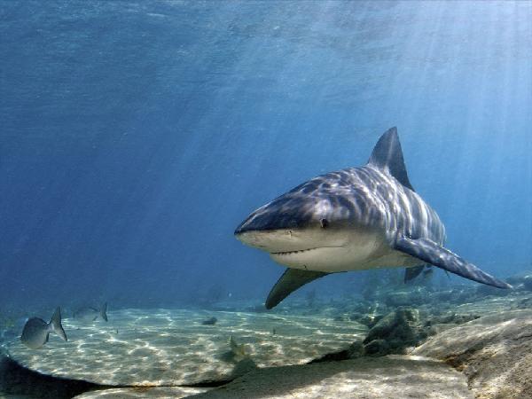 Scopri tutte le caratteristiche generali degli animali acquatici.
