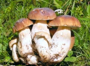 A tu per tu con il misterioso Regno dei funghi.