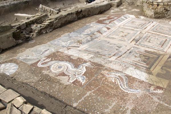 kaulon antica