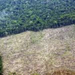 La deforestazione amplifica le catastrofi naturali