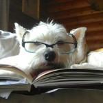 animali più intelligenti