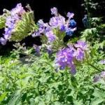 piante e zanzare
