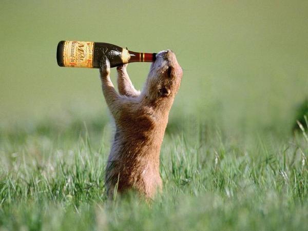 Gli animali si ubriacano?