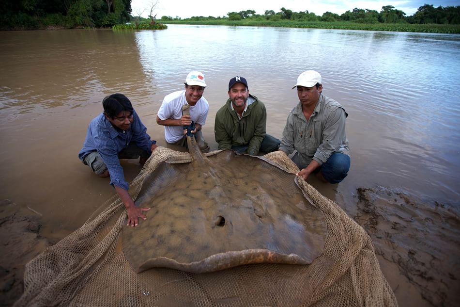 pesce in pericolo