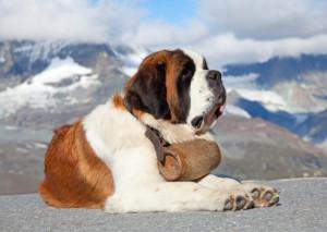 cane grande
