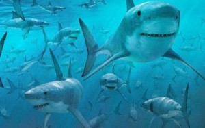 Ecco come un branco di migliaia di squali invade la costa negli Stati Uniti d'America.
