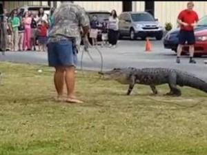 Ecco come una donna attaccata da un coccodrillo durante uno show riesce a salvarsi.