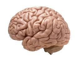 Le bufale sul cervello