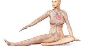10 curiosità da sapere sul corpo