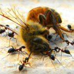 se le api sparissero