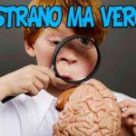 cosa sapere sul cervello umano