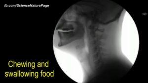 Ecco le immagini ai raggi X sul funzionamento del corpo umano.