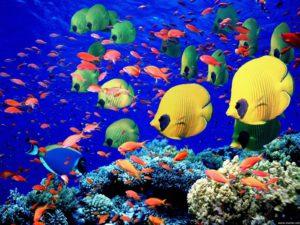 Quanti pesci ci sono nel mare?