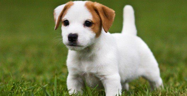 Calcolo età cane: la guida - Greenstyle