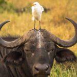foto belle sugli animali