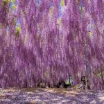 alberi più belli del mondo
