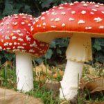 Ecco quello che devi sapere sui funghi velenosi