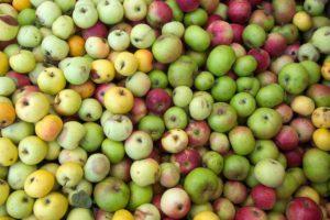 succo di mela e cancro