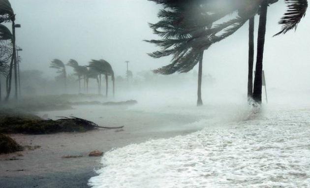 palme resistono agli uragani