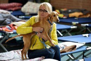 cane e terremoto