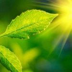 piante scottano sole