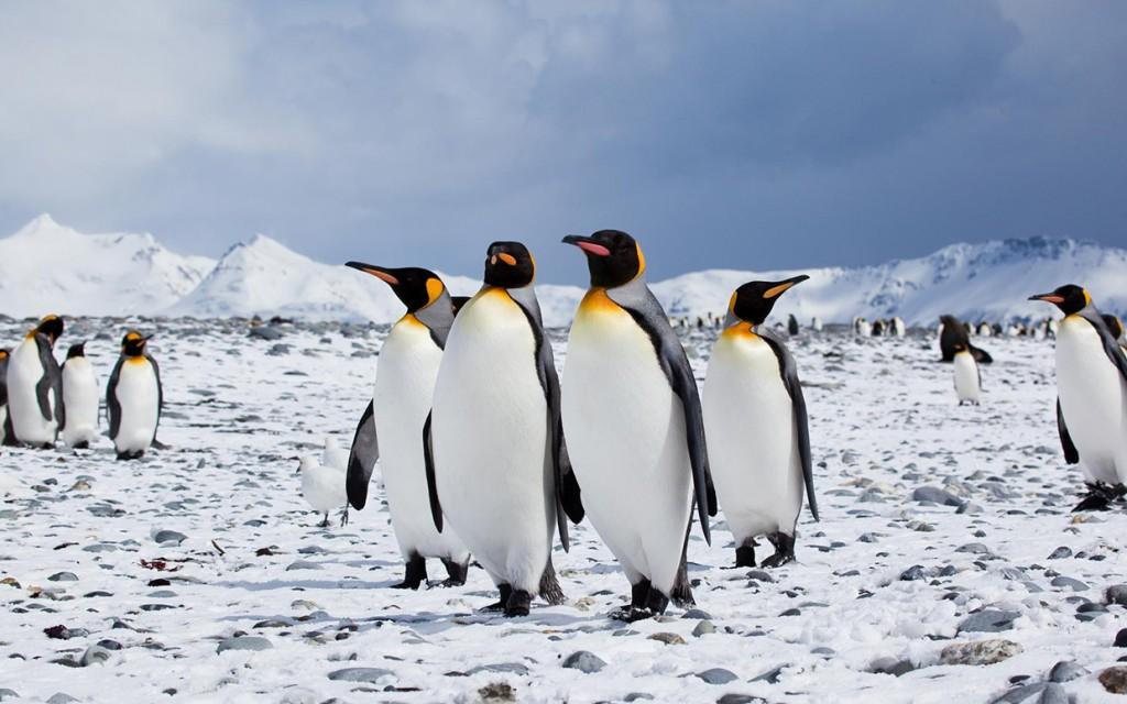 pinguini cambiamenti climatici