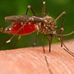 malaria cosa sapere
