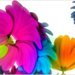 fiori belli mondo