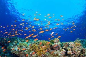 grande barriera corallina cosa sapere
