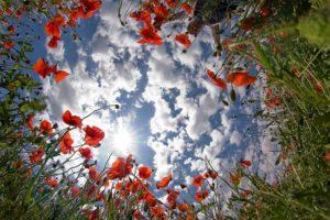 equinozio di primavera cosa sapere