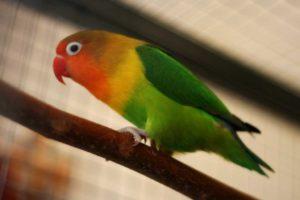 uccelli rari estinzione
