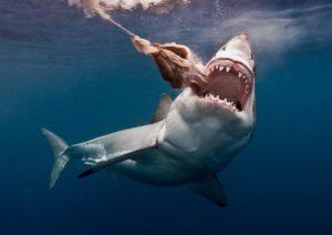 squalo specie interessanti