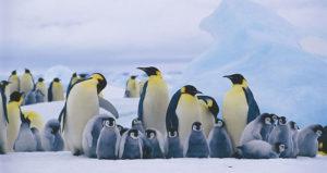 pinguini curiosità